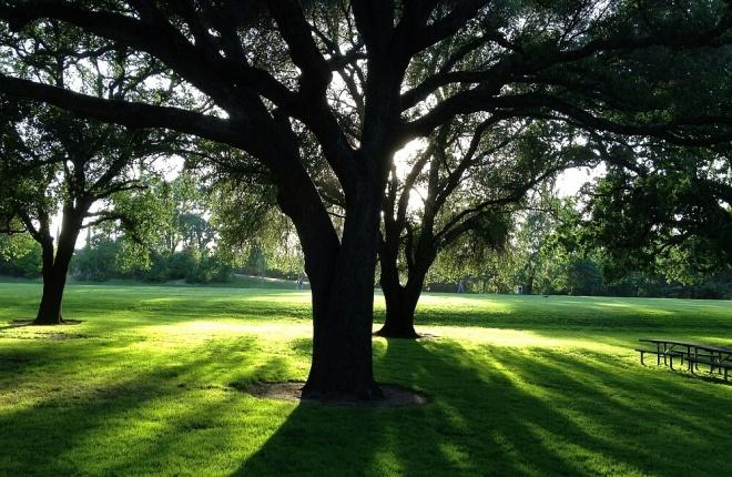 سایه , سایه درخت ,